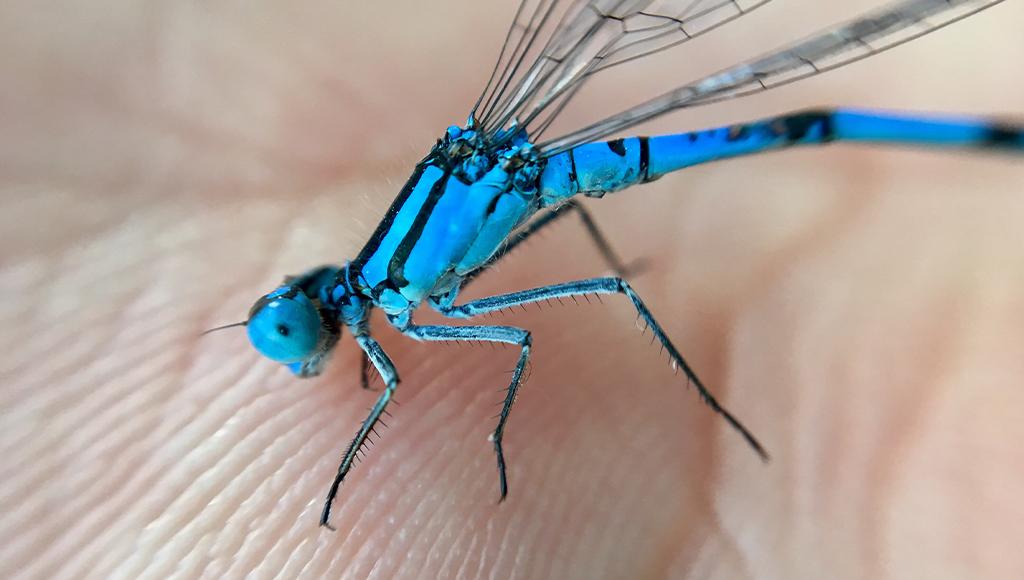 punture-di-insetti-3